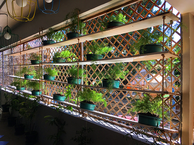 Potted plants on shelves due to the limited space in One Yoga studio