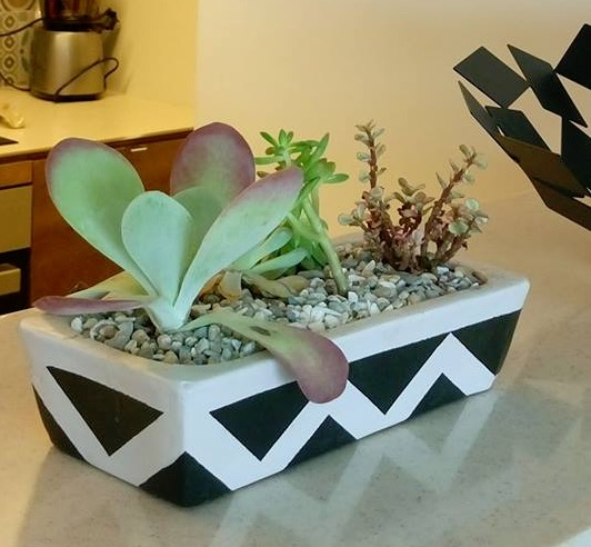 Succulent in a black and white pot