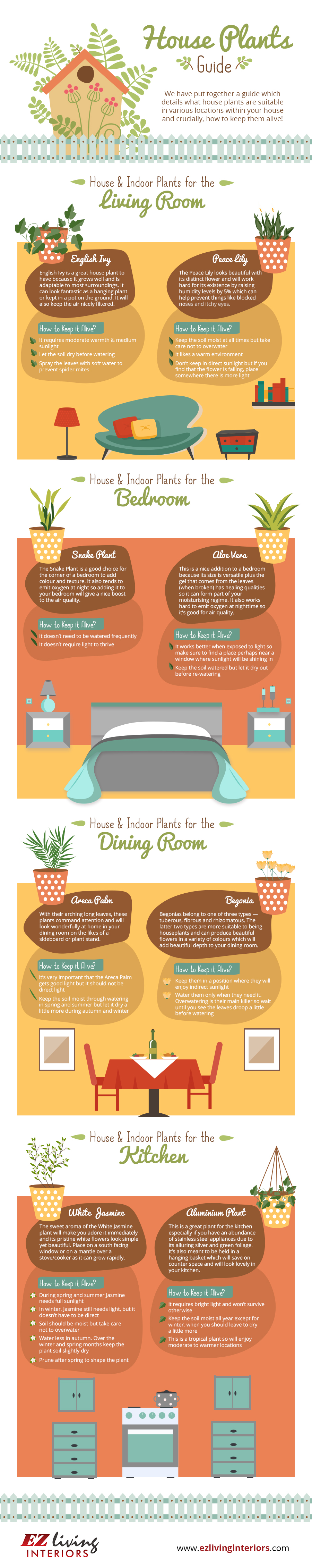 A Guide to House Plants
