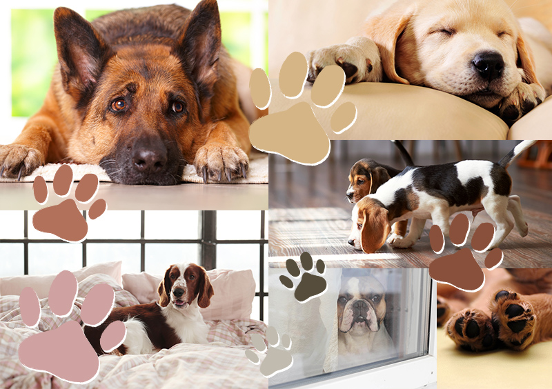 Palette of the Blissful Year of the Dog