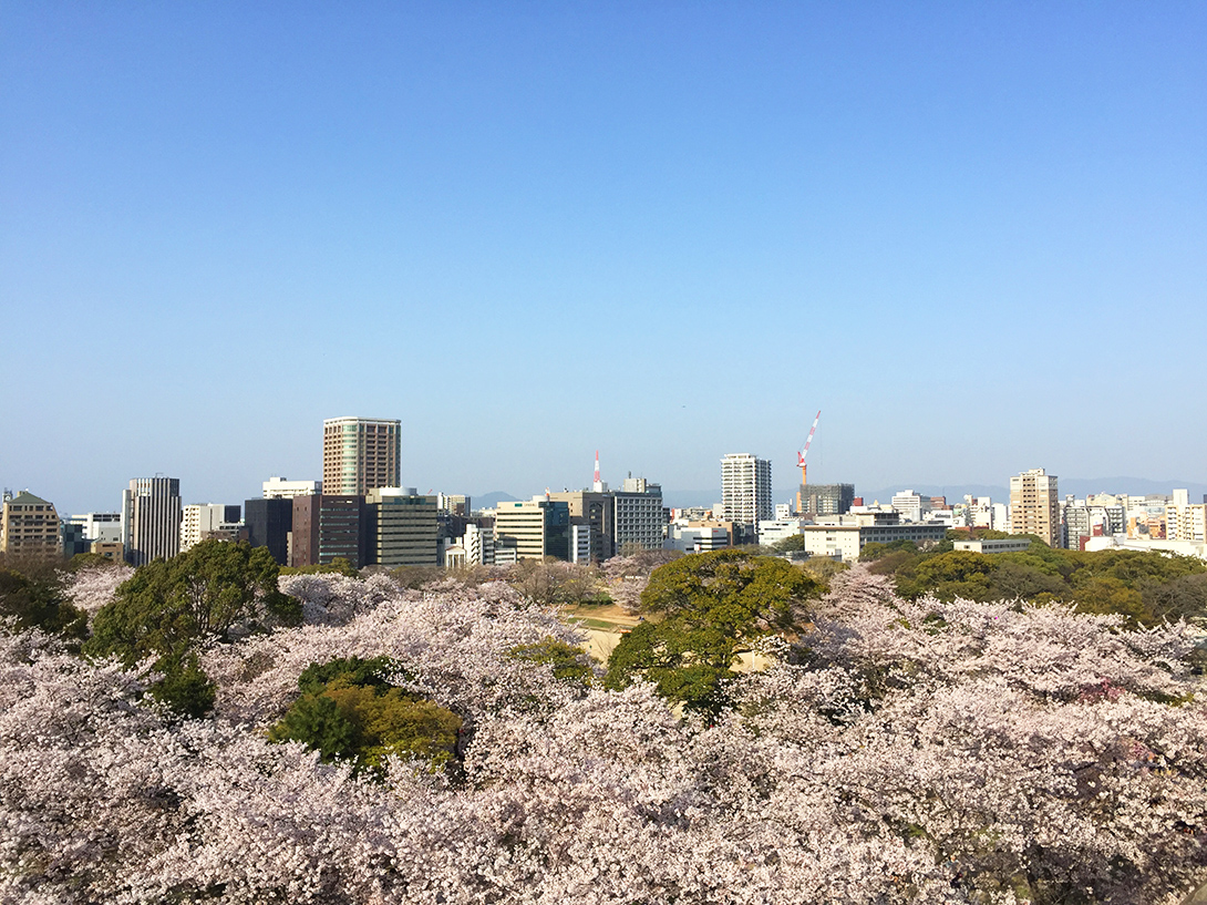 Cherry Blossom Pink as Color Inspiration for Personal Spaces