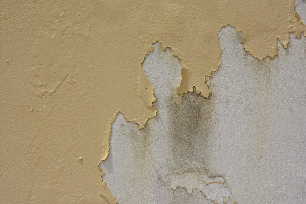 Common Painting Problems: What is Peeling?