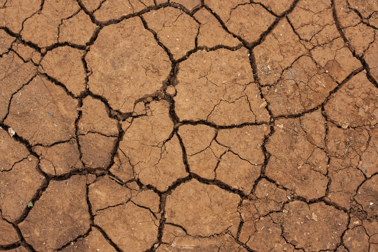 Close up of dry, cracked soil