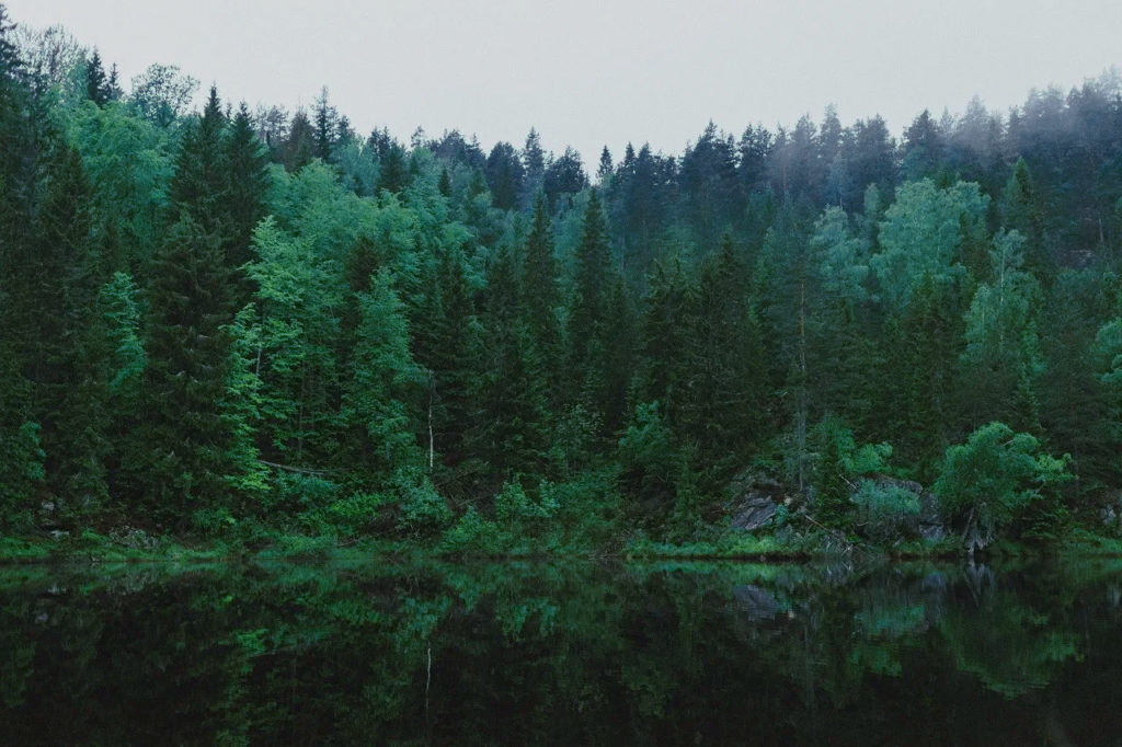 Wide shot of a lush green forest
