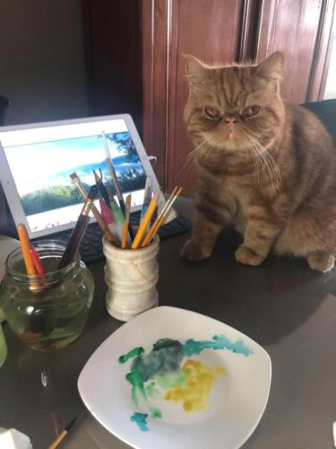 A Hooman Daddy's Cozy Cat Tales | MyBoysen